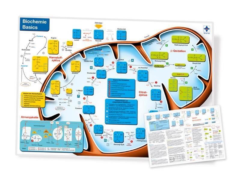 Biochemie Basics, DIN A4, laminiert - Coverbild