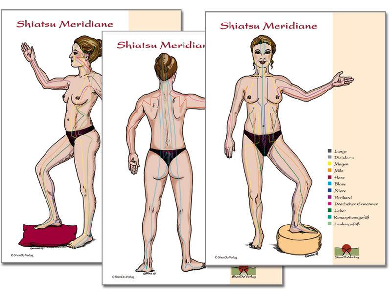 Meridiane 3 Shiatsu Meridian Schaubilder DIN A2 PDF Herunterladen