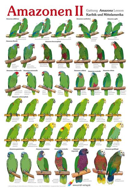 Poster Amazonen (2) - Coverbild