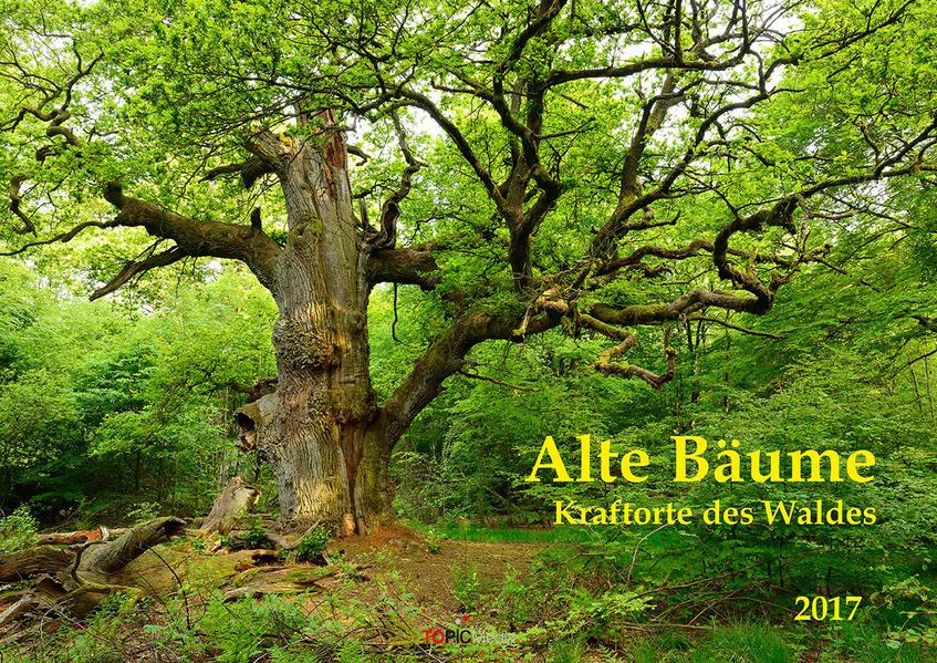 Alte Bäume - Kraftorte des Waldes 2017 - Coverbild