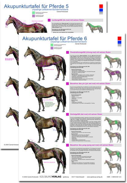 Akupunkturtafel für Pferde 5 + 6 - Coverbild