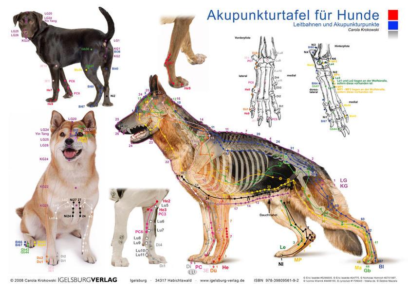 Tierakupunktur Akupunkturtafel für Hunde - Coverbild