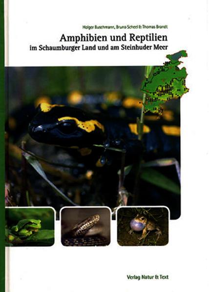 Amphibien und Reptilien im Schaumburger Land und am Steinhuder Meer - Coverbild