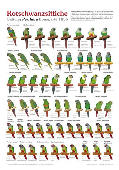 Rotschwanzsittiche - Coverbild