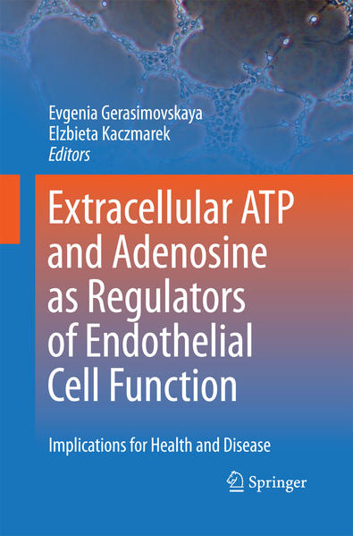 Extracellular ATP and adenosine as regulators of endothelial cell function - Coverbild